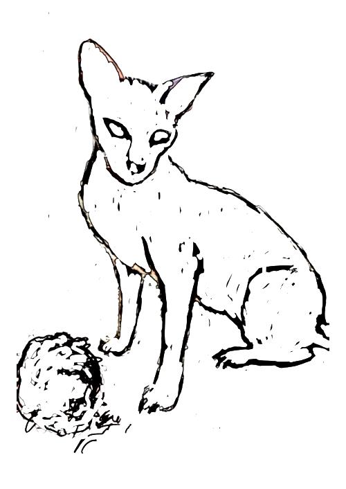 Zbigniew Szczepański - Kot