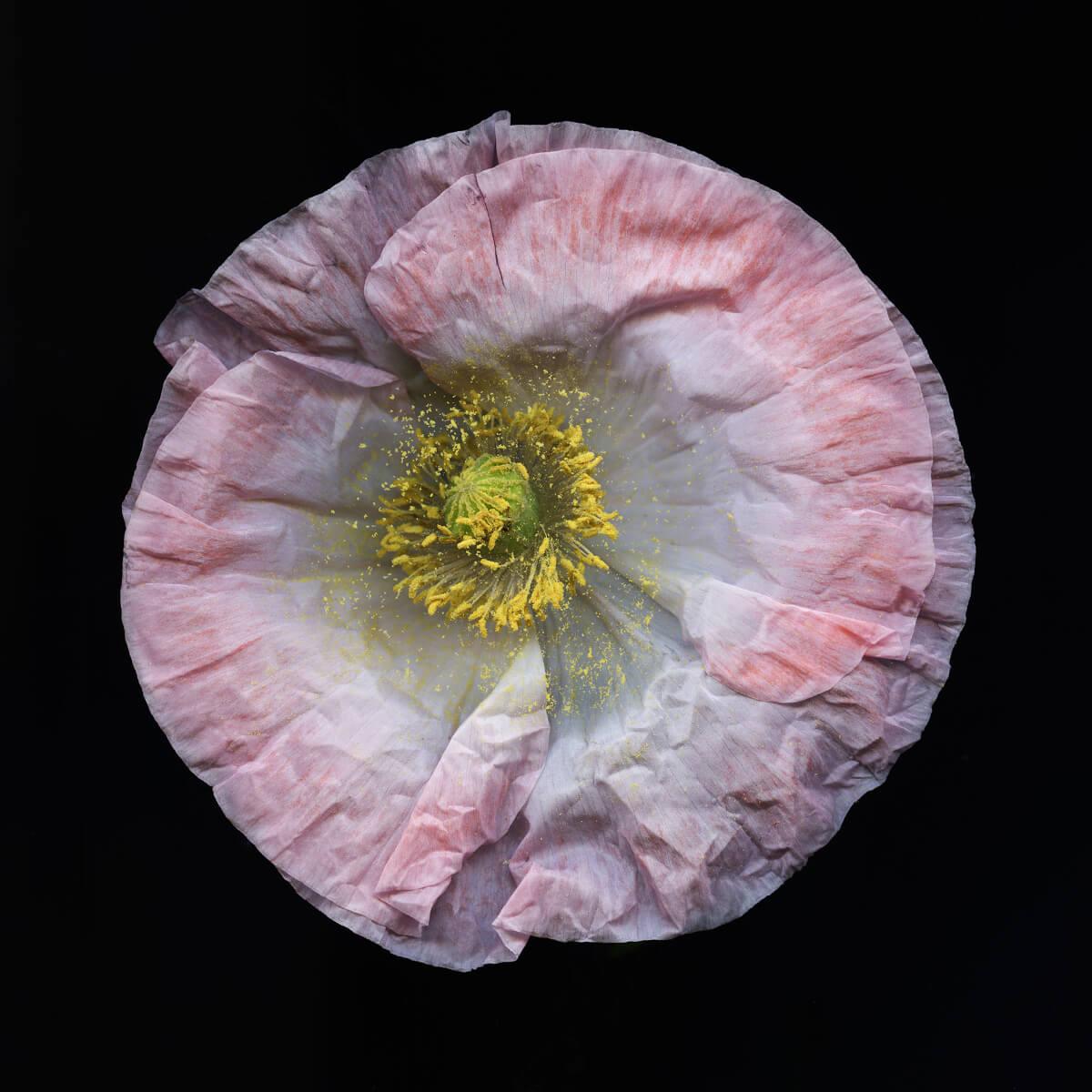 Danil Deneliuk - Pink Flow