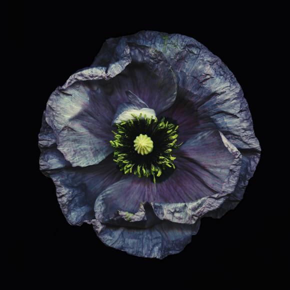 Danil Deneliuk - Almost Purple