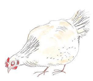 Kura w popkulturze